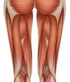 Hamstrings stretches
